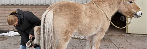 tips  winter horse grooming equestrian barns