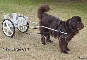 carts harnesses for sale custom dog carts for drafting With dog buggies for sale