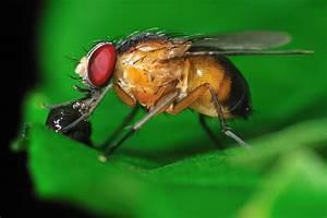 Hausmittel Gegen Fliegen : f nf hausmittel gegen fruchtfliegen news ~ Articles-book.com Haus und Dekorationen