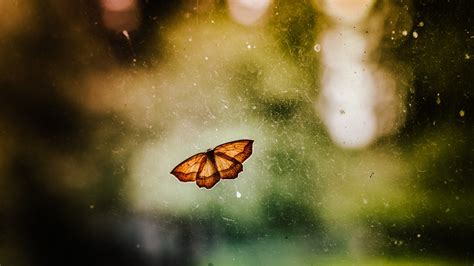 Desktop Wallpapers Hd by Backgrounds Of Butterflies Hd Desktop Wallpapers 4k Hd