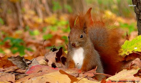 Autumn Animal Wallpaper - fall wallpaper with animals amazing wallpapers
