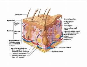 Unit 4  Integumentary System