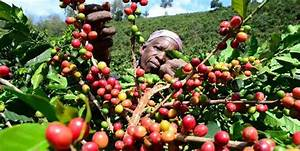 Cash crop economy | Softkenya.com