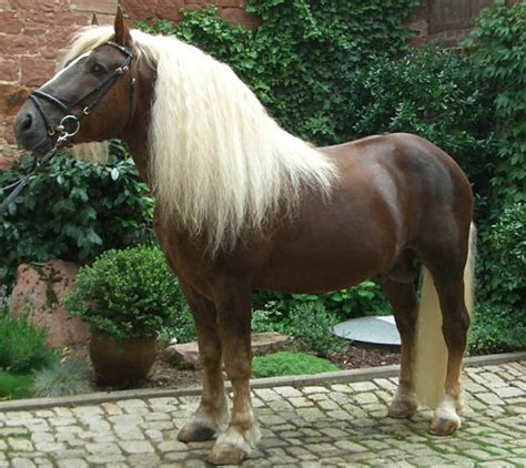 colors unusual horses horse most ever seen german st fore