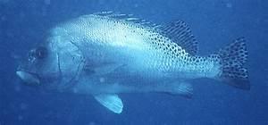 Fish List In Qatar