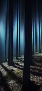 Dark, Forest, Wallpaper, 4k, Woods, Night, Time, Dark, Shadow