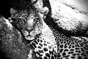 Schwarz Weiß Bilder Tiere : tanzania fotos aus der view fotocommunity ~ Markanthonyermac.com Haus und Dekorationen