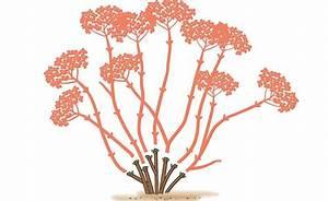 Wann Schneidet Man Hortensien Zurück : hortensien richtig schneiden garten hortensie schneiden garten und garten ideen ~ A.2002-acura-tl-radio.info Haus und Dekorationen