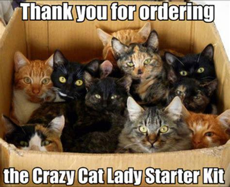 21 Funny Cat Captions  Random Funny Cat
