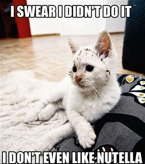 lol cats  awesomely funny cat   crack
