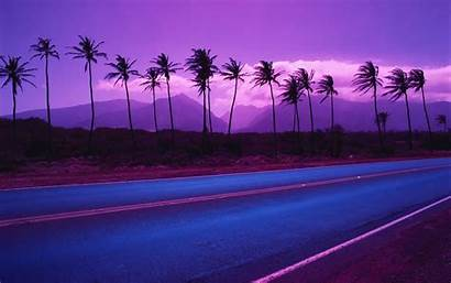 Palm Trees Tree Desktop Wallpapers Pixelstalk