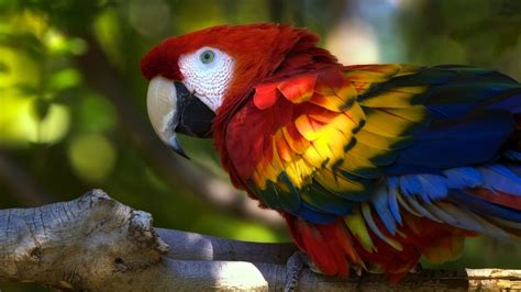 13 Beautiful Hd And 4k Wallpapers Of Exotic Birds That You
