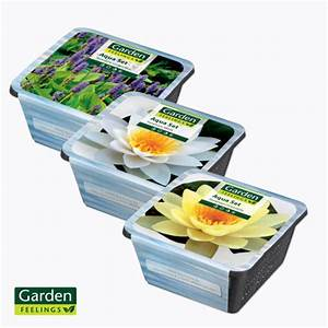 Garden Feelings Aldi : garden feelings teichpflanzen von aldi nord ansehen ~ Orissabook.com Haus und Dekorationen