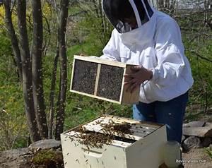 Beginner Beekeeper U0026 39 S Guide  With Images