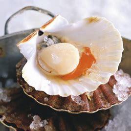cuisiner le corail des coquilles jacques noix de jacques cuites en coquilles émulsion de