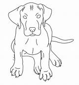 Dane Puppy Coloring Pages Dog Realistic Deviantart Lps Kennels Template Drawings Sketch Lineart Templates Down Deviant Login sketch template
