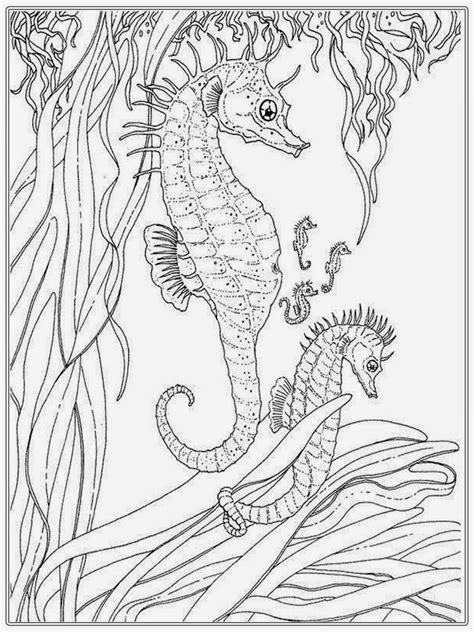 realistic seahorse coloring pages for adult realistic