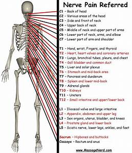 Fibro Nerve Pain  This Is A Very Good Diagram Of What