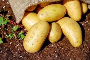 Kartoffeln Lagern Ohne Keller : kartoffeln lagern so geht s richtig ~ Frokenaadalensverden.com Haus und Dekorationen