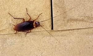 Insecte De Maison : 7 causes l 39 origine d 39 une infestation d 39 insectes dans la ~ Melissatoandfro.com Idées de Décoration