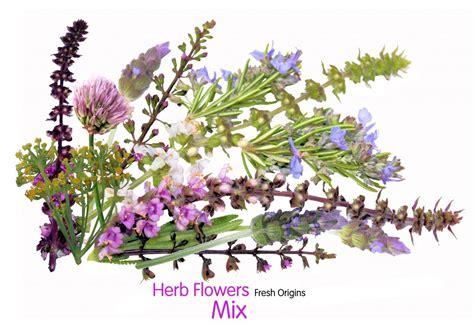 edible flowers firestix sparklers microflower blend