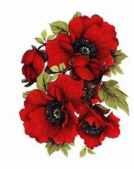 Best poppy flower drawing ideas and images on bing find what you poppy flower clip art mightylinksfo