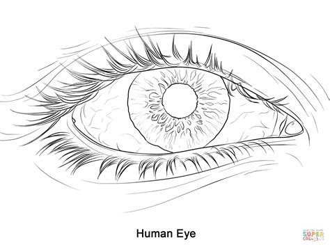 human eye coloring page  printable coloring pages