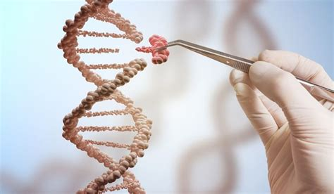 Modification To Dna by What Is Genetic Modification Worldatlas