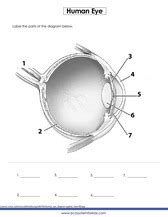 Eye Diagram For Quiz by 2nd Grade Science Worksheets For Practice Pdf