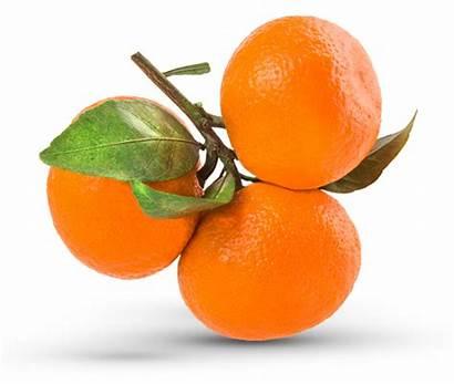 Mandarinas Orange Mandarin Orogrande Clementine Clemetine Buyer