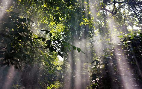 foggy rainforest  wallpaper hd nature pictures