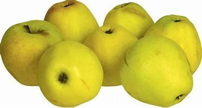 Apple Yellow Transparent Apples Clipart Purepng Pngimg