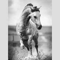 Schöne Pferde Bilder, Die Die Großartigkeit Der Pferde
