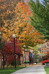 """Arbor Day Foundation honors Goshen College as """"Tree Campus ..."""