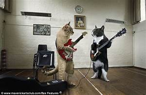Musical cats Christmas calendar | Daily Mail Online