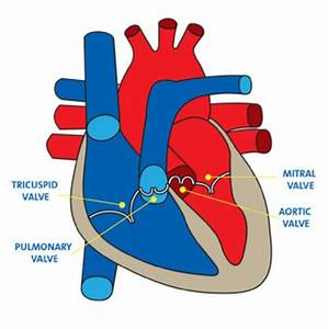 Heart Valve Disorder Treatment In Kenya