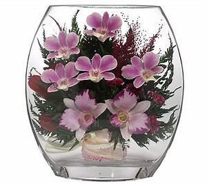 Orchideen Im Glas Dekorieren : pur fleur echtblumen orchideen im glas ellipsenform h ca ~ Watch28wear.com Haus und Dekorationen