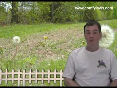 how to get rid of weeds organically how to get rid of lawn weeds organically youtube