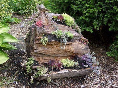 124 Wurzel Deko Garten  Mopani Wurzel Mopaniholz