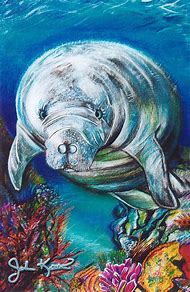 West Indian Manatee Drawing