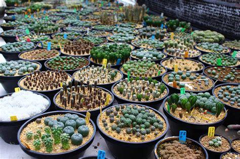 cactus-06-13-03 | แคคตัส กระบองเพชร ไม้อวบน้ำ