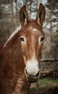 Dan Routh Photography: Mule