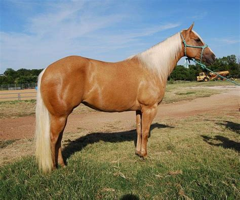 horses texas performance equinenow equine farms farm pretty quality cleburne