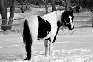 1000+ images about white and black horses on Pinterest