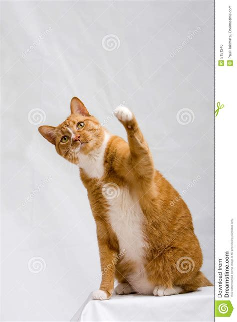 cute cat  paw  stock photo image  feline