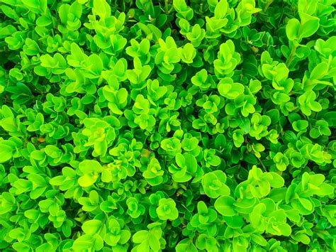 Green Plants Pattern Free Stock Photo - Public Domain Pictures