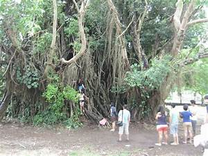 Trese: The Oldest Balete Tree in Baler