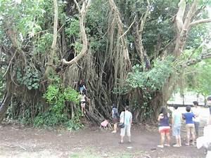 Trese: The Oldest Balete Tree in Baler