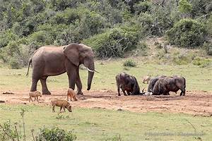 Different Wild Animals Together