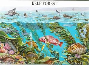Kelp Forest – Nature of America | Remembering Letters and ...